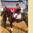Delhi Horse Show